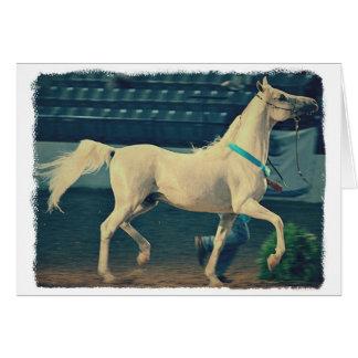 Cavalo árabe da mostra cartão comemorativo
