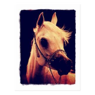 Cavalo árabe em uma cabeçada da mostra cartão postal