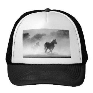 cavalo boné
