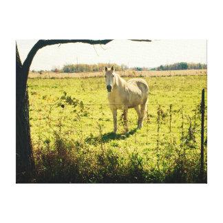 Cavalo branco bonito que está no pasto verde impressão em tela