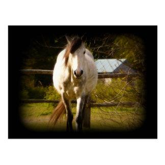 Cavalo branco cartão postal