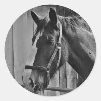 Cavalo branco preto - arte animal da fotografia adesivo
