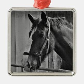 Cavalo branco preto - arte animal da fotografia ornamento quadrado cor prata