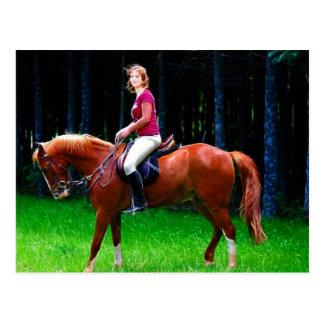 Cavalo calmo na floresta cartão postal