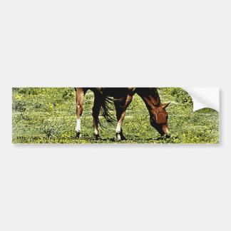 Cavalo da azeda adesivos