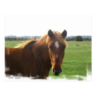Cavalo da castanha com um cartão da chama
