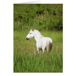 Cavalo de Camargue no Alpes Cote d'Azur do Cartão Comemorativo