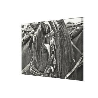 CAVALO de CARRUAGEM impressão de 24 x 16 canvas