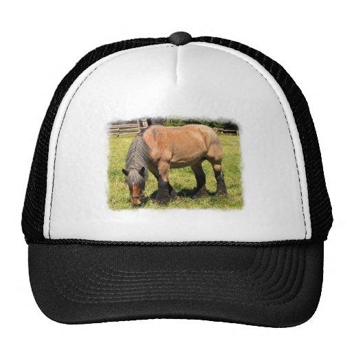 Cavalo de esboço bones