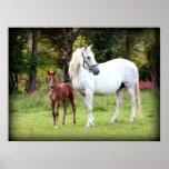 Cavalo de esboço irlandês poster