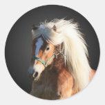 Cavalo de Haflinger Adesivos Em Formato Redondos