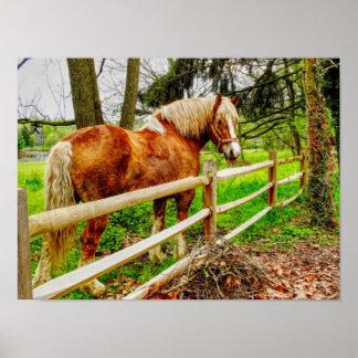 Cavalo de Lancaster - impressão da arte