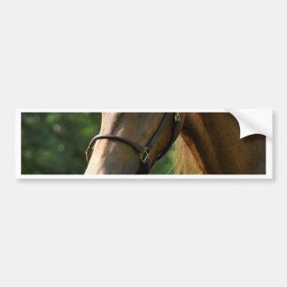 Cavalo de Morgan do Buckskin Adesivo Para Carro