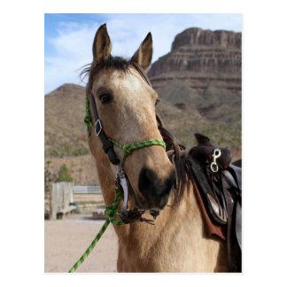 Cavalo de passeio de Tennessee do cartão
