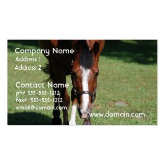 Cavalo de um quarto americano de vagueamento cartões de visitas