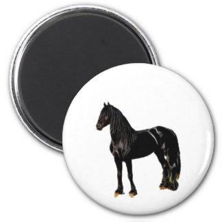 Cavalo do campeão imã