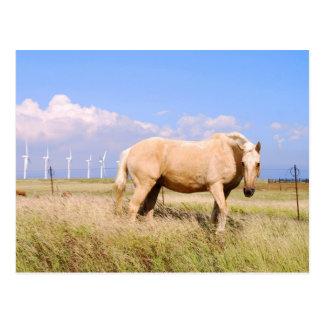 Cavalo do Palomino com cartão dos moinhos de vento