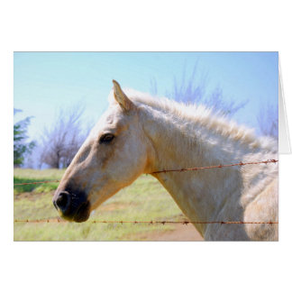 Cavalo do Palomino no cartão da cerca
