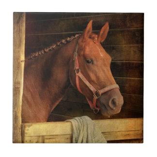 Cavalo do puro-sangue