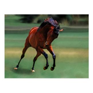 Cavalo do rodeio para o vaqueiro cartões postais