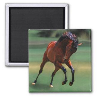Cavalo do rodeio para o vaqueiro imas