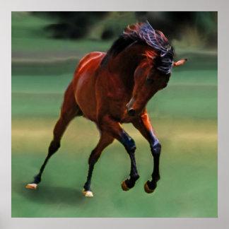Cavalo do rodeio para o vaqueiro poster