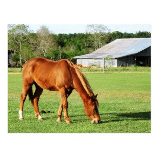 cavalo e celeiro cartão postal