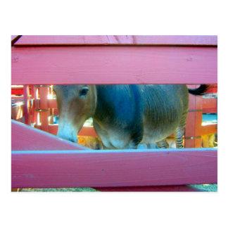 Cavalo e cerca cor-de-rosa - cartão
