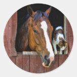 Cavalo e gato adesivo redondo
