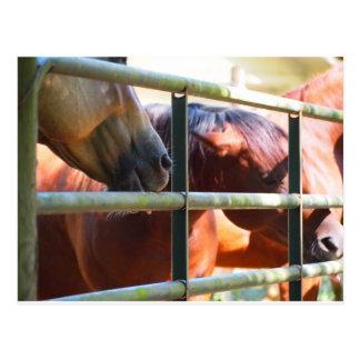 Cavalo engraçado cartão postal