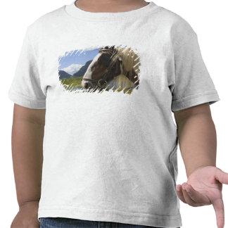Cavalo, Gap de Dunloe, Kerry do condado, Ireland Camisetas