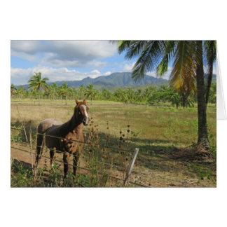 Cavalo havaiano cartão