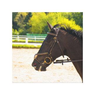 cavalo impressão em tela
