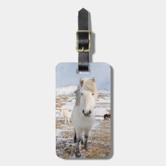 Cavalo islandês branco, Islândia Etiqueta De Bagagem