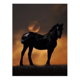 Cavalo majestoso cartao postal