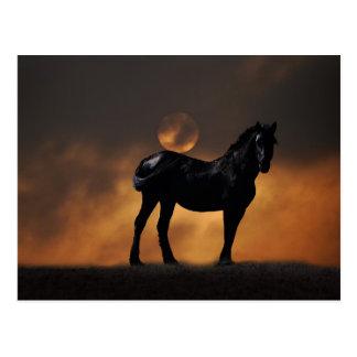 Cavalo majestoso cartão postal