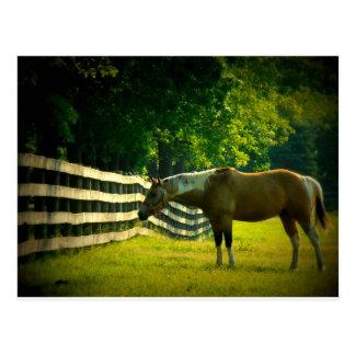 cavalo marrom e branco que pasta o cartão