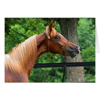 Cavalo nacional da mostra cartão comemorativo