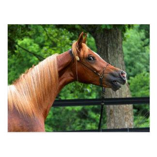 Cavalo nacional da mostra cartão postal