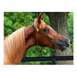 Cavalo nacional da mostra cartões postais