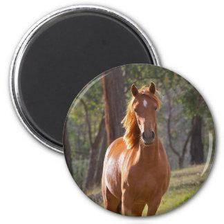 Cavalo nas madeiras imã