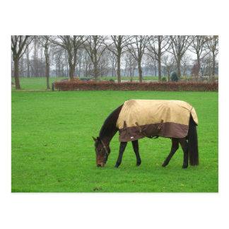 Cavalo no cartão do prado