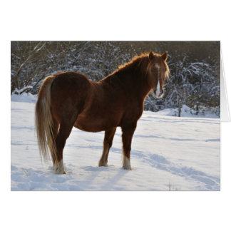Cavalo no cartão do Xmas da neve