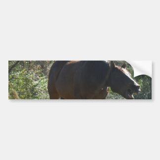 Cavalo no outono adesivo