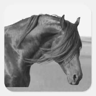 Cavalo orgulhoso do garanhão do preto do frisão adesivo quadrado