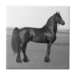 Cavalo orgulhoso do garanhão do preto do frisão azulejos de cerâmica