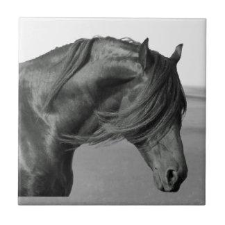 Cavalo orgulhoso do garanhão do preto do frisão azulejo quadrado pequeno
