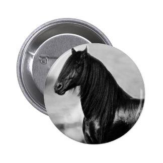 Cavalo orgulhoso do garanhão do preto do frisão botons