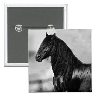 Cavalo orgulhoso do garanhão do preto do frisão boton