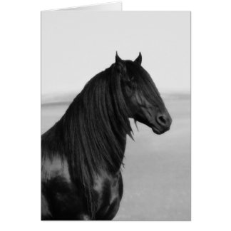 Cavalo orgulhoso do garanhão do preto do frisão cartão comemorativo